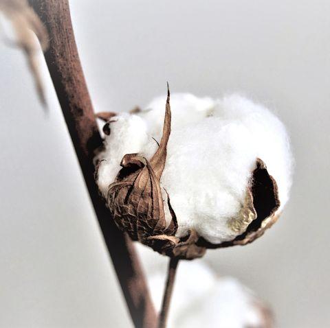 Cotton bale on light background