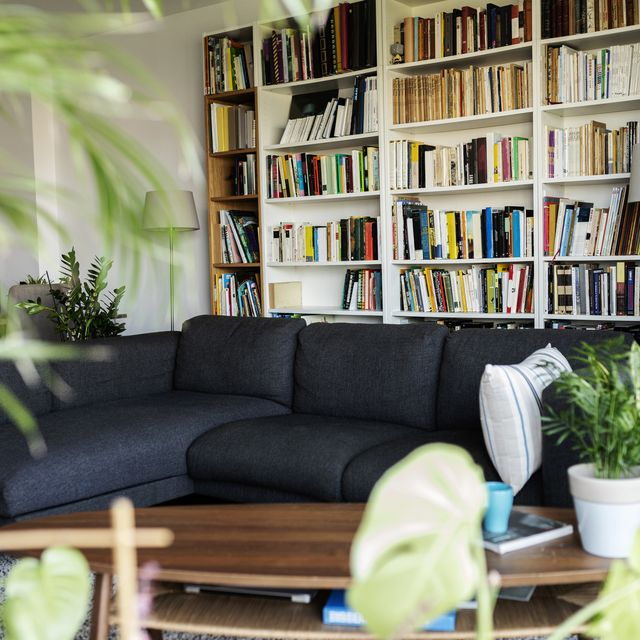 couch and bookshelf in cozy living room
