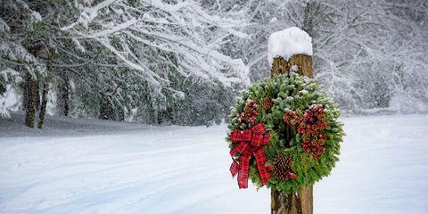 Snow, Winter, Freezing, Floral design, Winter storm, Plant, Tree, Flower, Blizzard, Flower Arranging,