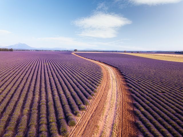 country road through lavender fields in provence, france