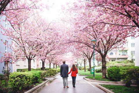 Couple sorrounded by Sakura Blossom.