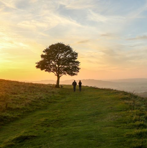 couple walking past solitary tree