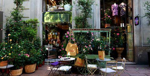 Floristry, Houseplant, Flower, Building, Flowerpot, Plant, Table, Floral design, Tree, Room,