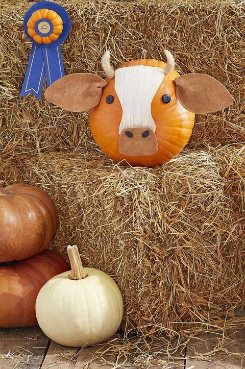 cow pumpkin face idea