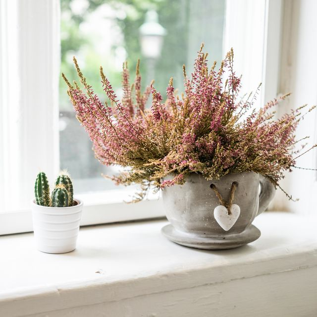 small plants decorating the window sill on a summer morning