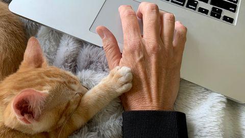 kat poes thuiswerken huisdier dier tijd stress tijdsdruk ontspannen kantoor thuis bureau bank