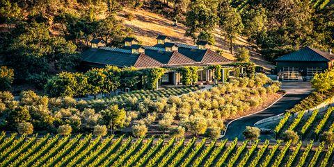 Terrace, Field, Plantation, Landscape, Rural area, Agriculture, Farm, Tree, Vineyard, Plant,
