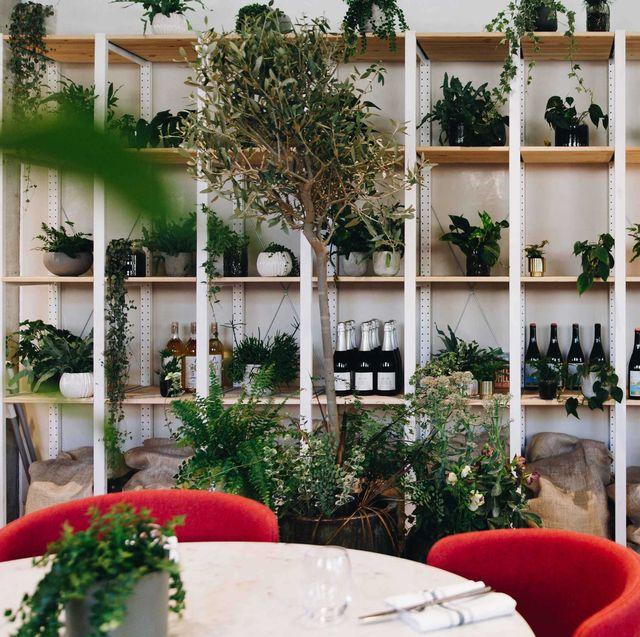 Houseplant, Room, Flowerpot, Interior design, Building, Plant, Real estate, Architecture, House, Furniture,