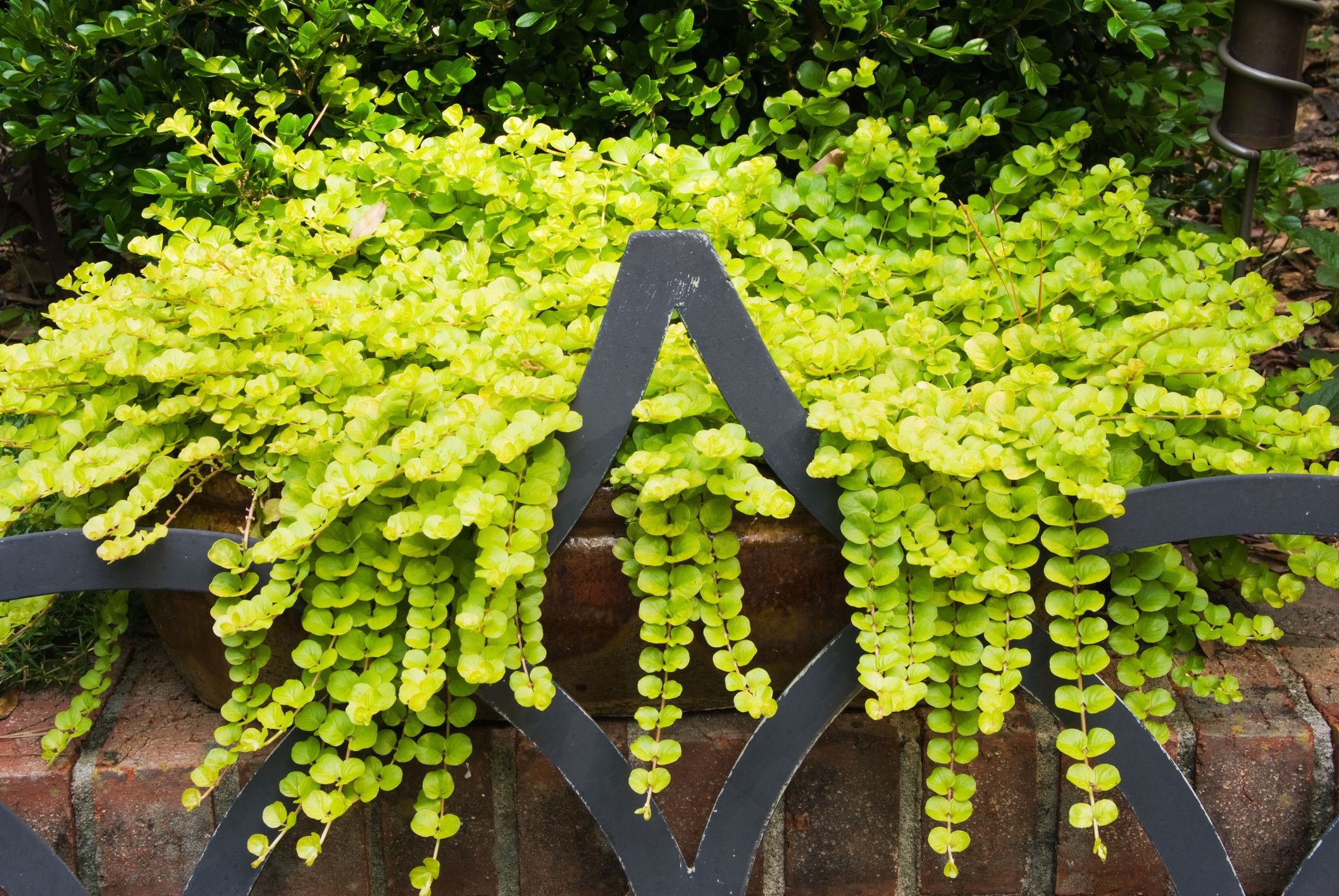 15 Best Shade Perennials Shade Loving Perennial Flowers And Plants