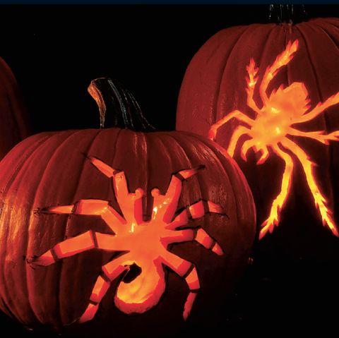 creepy crawly spiders pumpkin
