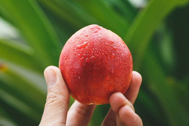 cropped hand holding wet peach against plants