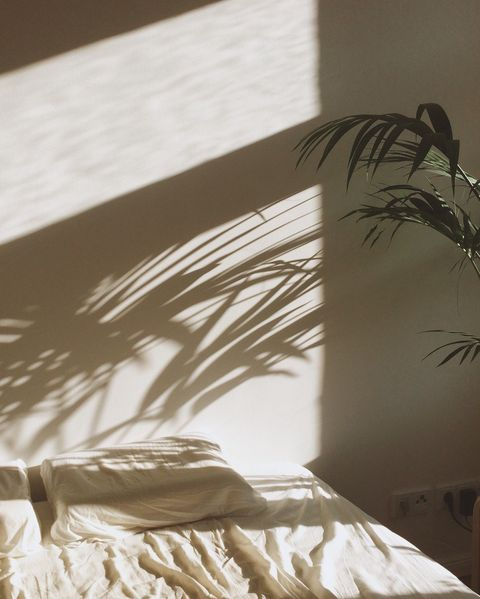 cropped potted plant with shadow against the wall