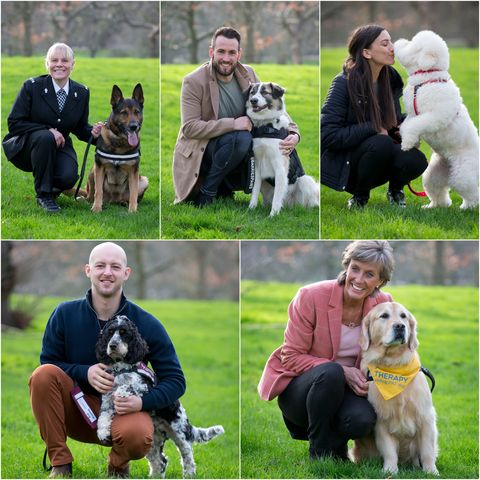 Inspiring dogs up for a Crufts award
