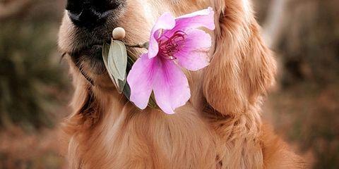 Animali Perche I Cuccioli Di Cane Fanno Bene Alla Vita