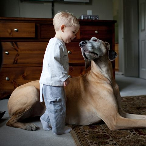 cuddly-dogs-great-dane