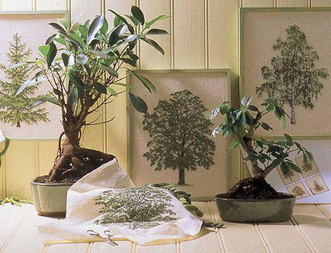 Houseplant, Plant, Flowerpot, Bonsai, Tree, Flower, Room, Interior design,