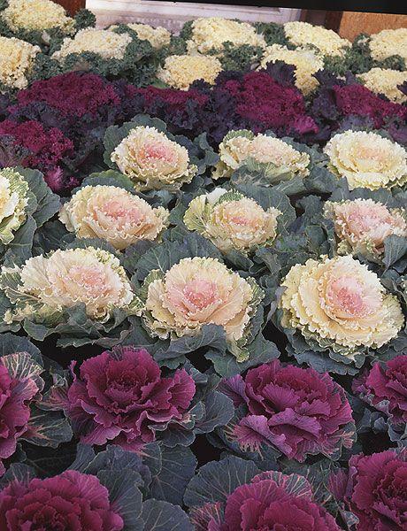Flower, Plant, Petal, Flowering plant, Pink, Rosa × centifolia, Cut flowers, Floral design, Rose, Garden roses,