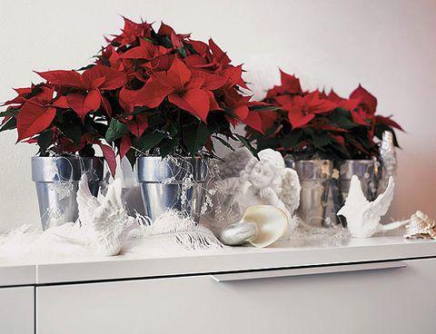 Red, Poinsettia, Flower, Leaf, Plant, Cut flowers, Tree, Centrepiece, Artificial flower, Floral design,