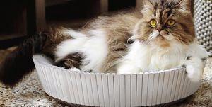 Cama gatos de diseño