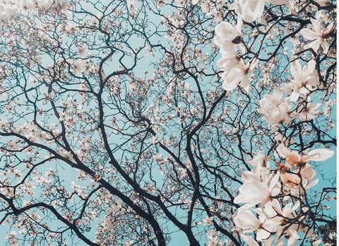 Branch, Tree, Spring, Blossom, Plant, Woody plant, Flower, Twig, Cherry blossom, Sky,