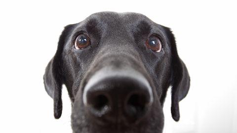 Honden kunnen waarschijnlijk geen angst ruiken