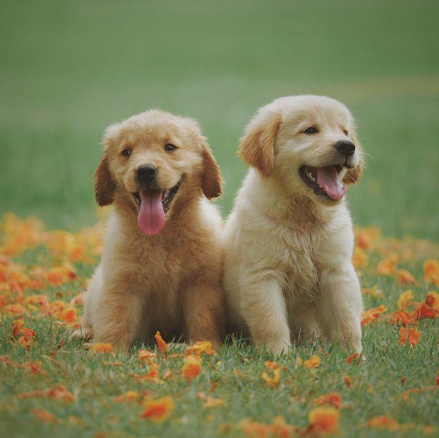 https://hips.hearstapps.com/hmg-prod.s3.amazonaws.com/images/cute-baby-animals-1558535060.jpg?crop=0.752xw:1.00xh;0.125xw,0&resize=640:*