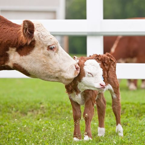 Baby Animals Cute Photos Of Baby Animals