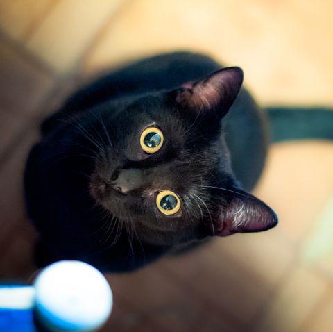 cute black cat with yellow eyes staring upward