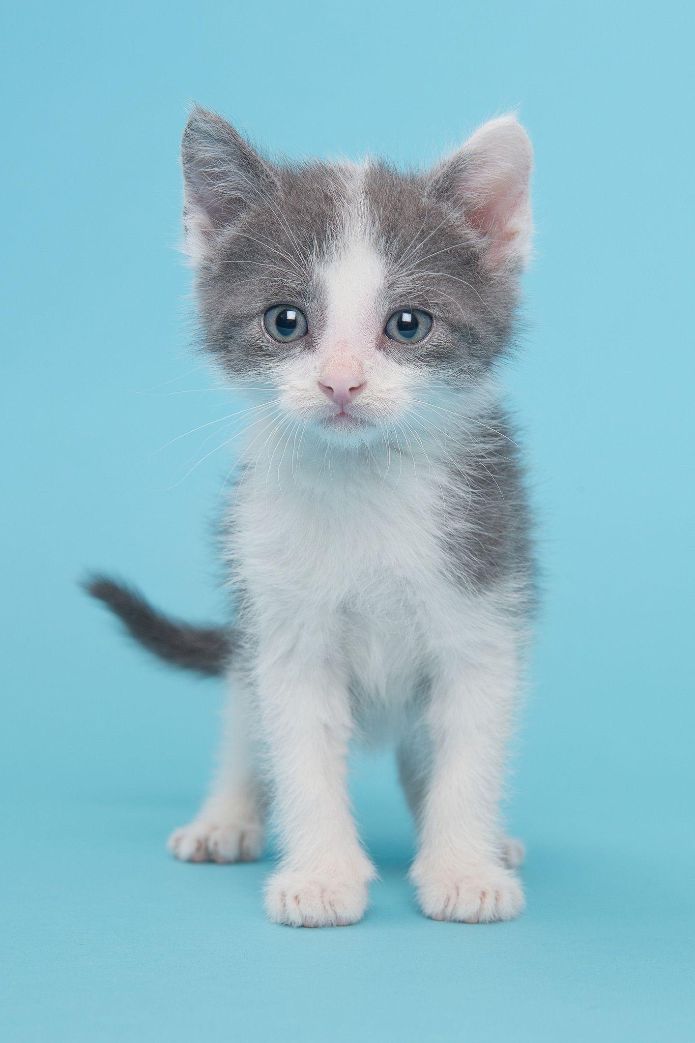 20 Cute Cat Names Adorable Boy And Girl Kitten Names