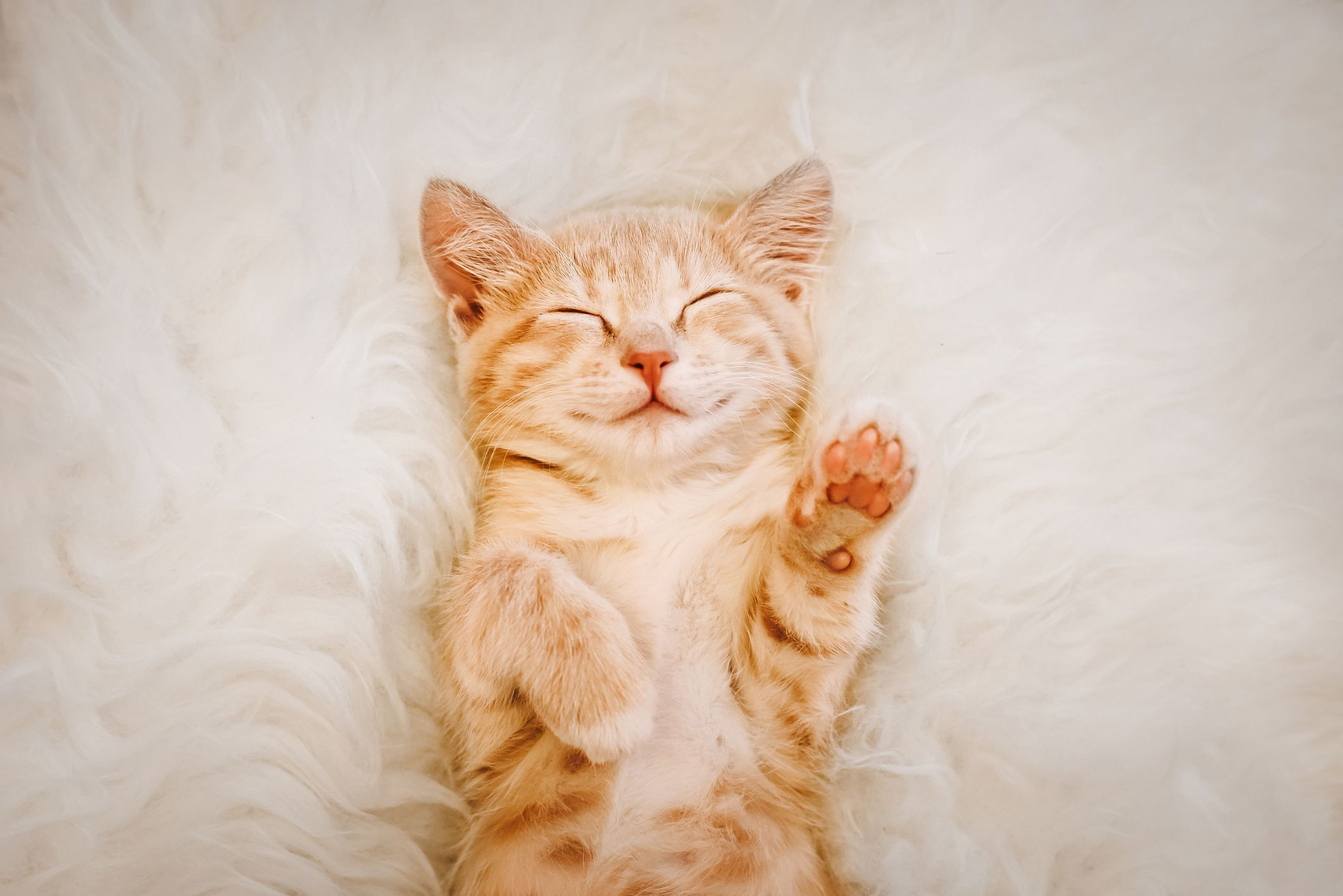 30 Cute Cat Photos Best Photos Of Cats