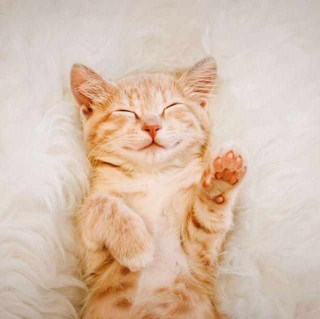 30 Cute Cat Photos — Best Photos of Cats