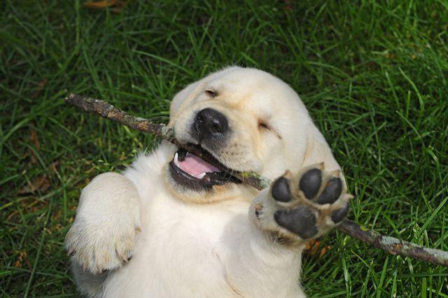 cute dog video lead