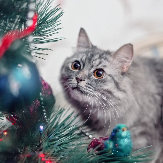 10 popular christmas traditions that could put our pets at risk
