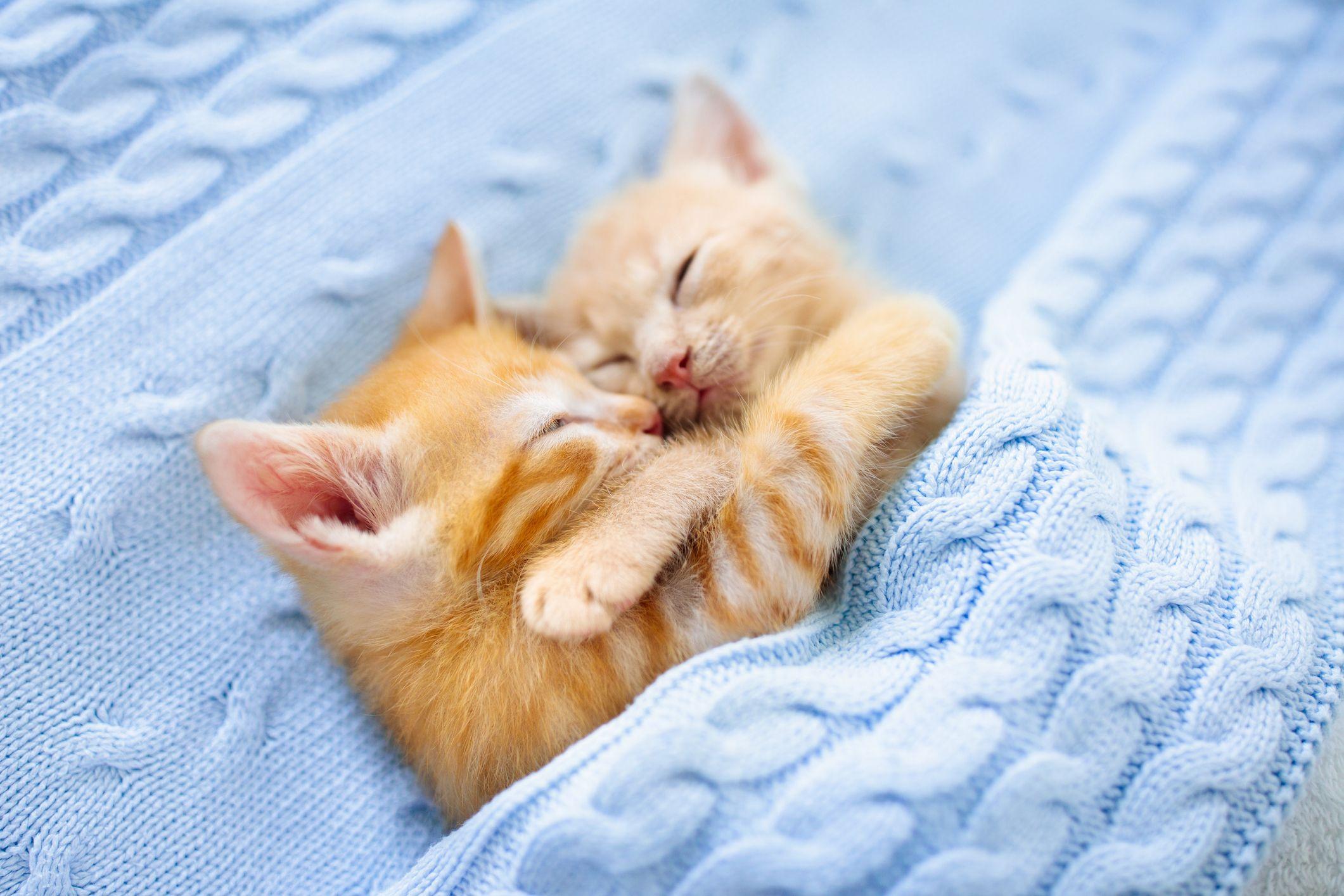 cute-photos-of-cats-cuddling-1593203046.jpg