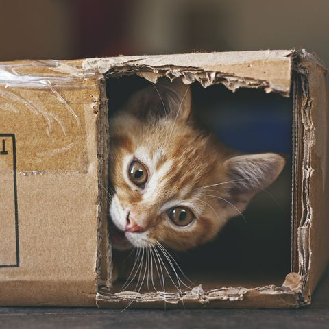 cute photos of cats in box