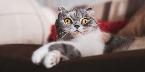 犬に比べて、気持ちがわかりにくいといわれている猫。ミステリアスだからこそ良い、という猫好きの声も聞こえてきそうですが、猫の気持ちがわからなくて困るときやもっと彼らの言葉を知りたいときもあるはず。そこで、二人の獣医さんに聞いた「猫の言葉の読み取り方」を、<ウーマンズ・デイ>からご紹介します。