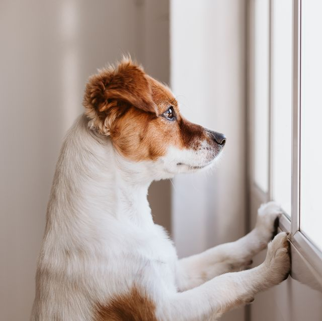 10 tips to prevent pet damage at home