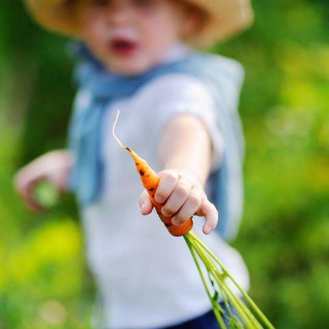 cute toddler boy showing fresh organic carrot