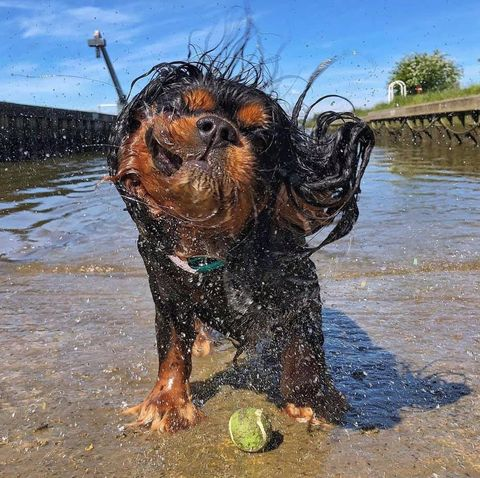 competition reveals the uk's cutest wet dogs