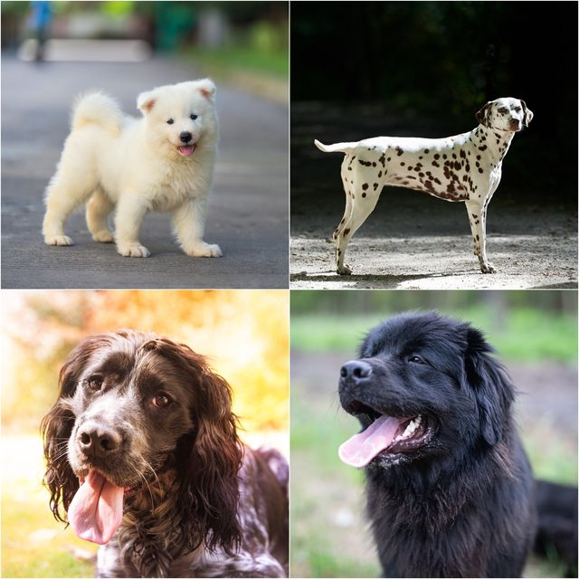 20 cutest dog breeds in the world