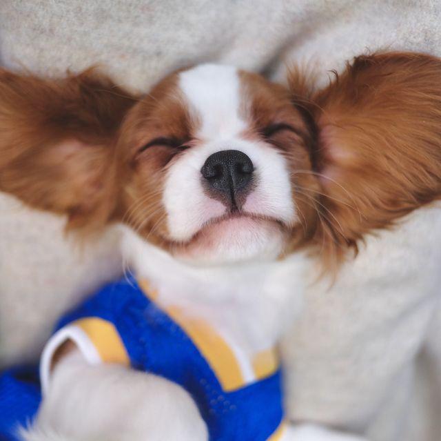 cutest-dog-breeds-