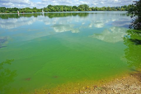 Dog owners are being warned over toxic blue-green algae found in UK lakes