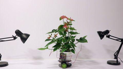 Flower, Plant, Flowerpot, Anthurium, Houseplant, Origami, Wheel,