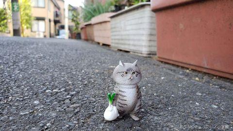 Cat, Small to medium-sized cats, White, Felidae, Asphalt, Whiskers, Domestic short-haired cat, Aegean cat, Eye, European shorthair,