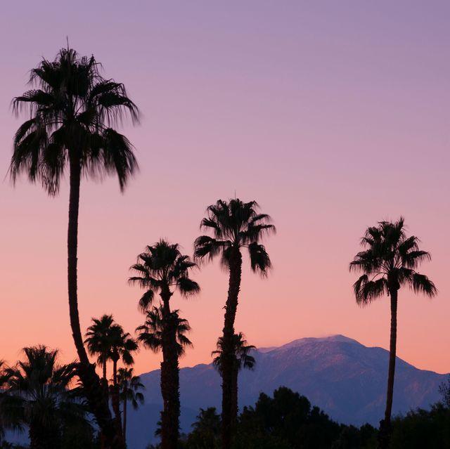 d49ep6 palm trees and san jacinto mountains at dusk rancho mirage, california
