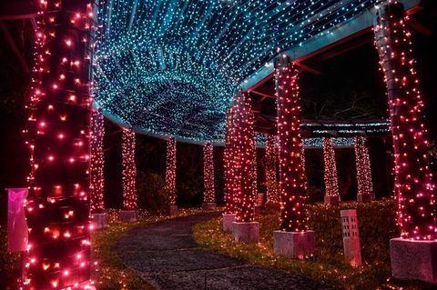 粉色、藍色燈光的桃花隧道
