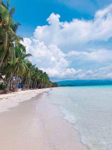 Body of water, Tropics, Beach, Sky, Sea, Caribbean, Shore, Tree, Ocean, Palm tree,