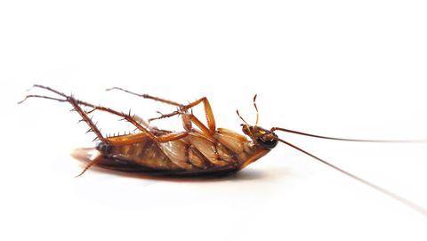 bang-voor-kakkerlakken