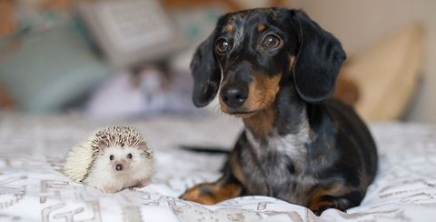 Cute Dog Pictures