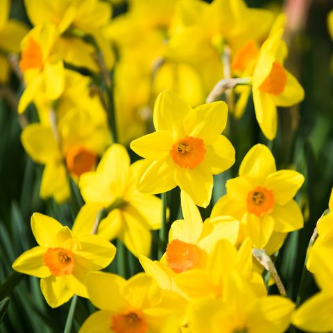 11 Best Flowers To Plant For Spring When To Plant